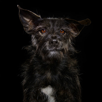 The Plight of Black Dogs in NYC