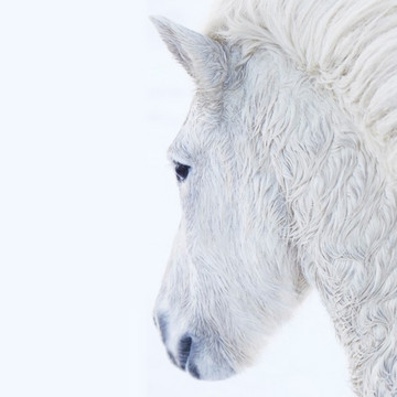 9 Majestic Photos of Icelandic Horses