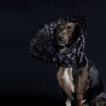 These Dogs Turn Cones into Fashion Statements