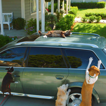 The Fun Side of Auto Insurance Shopping