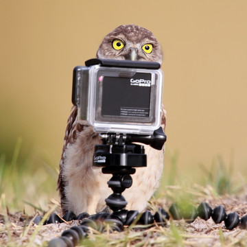Candid Animals Shots That Will Make You Laugh