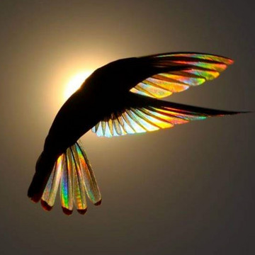 Stained Glass Hummingbirds