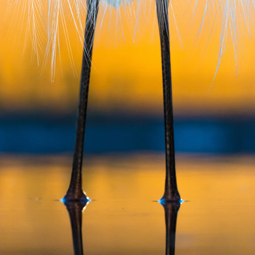 The Winners of a Bird Photography Contest