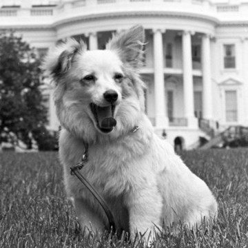 Most Adorable Historic Presidential Pups