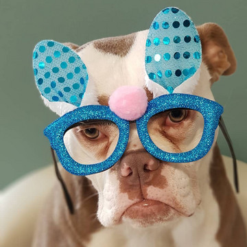 The Saddest Dog on the Internet: Madame Eyebrows