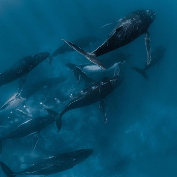 The Majestic Beauty of Whales