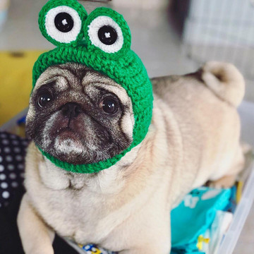 The Best Pugstagrams You Need to be Following
