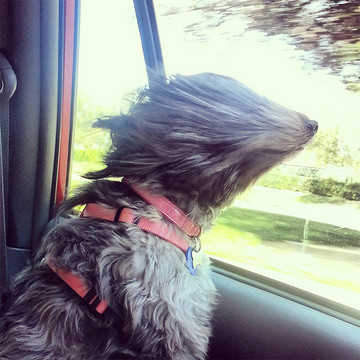 Hilarious Shots of Dogs in the Wind